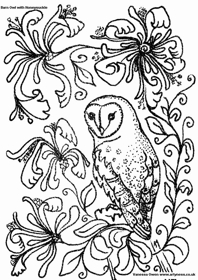 owl coloring page line drawing of a barn owl with honeysuckle flowers free owl colouring pages for you to print