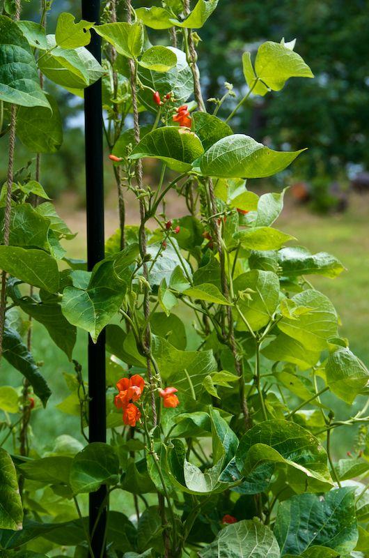 Vegetable Container Garden Problems | GARDENING IDEAS | Pinterest