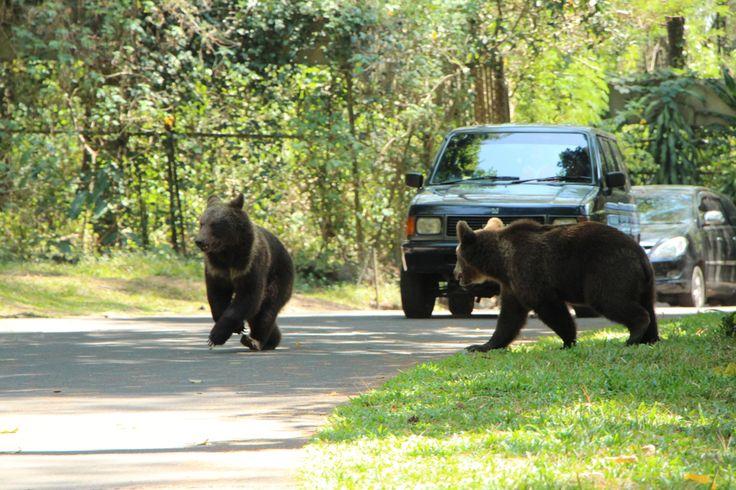 Real Safari Adventure...Find it on Safari Park II Indonesia...