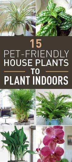 15 top pet friendly houseplants you can plant indoors pets rh pinterest com