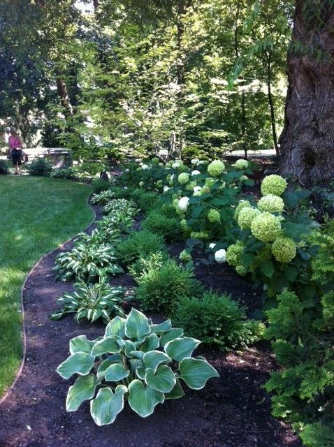 Shady yard with Hostas Hydrangeas – might look good in our shady front yard!
