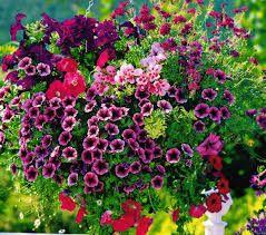 Resultado de imagen para flores naturales para jardin