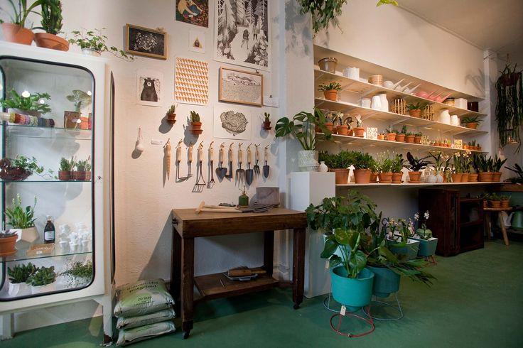 Wildernis Amsterdam | plants and city gardening shop | green composition | cactus | white pharmacist cabinet wildernis-amsterdam-stadstuin-kamerplanten-winkel-4