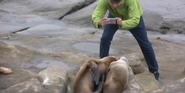 Idioti! Ecco i turisti che hanno terrorizzato i leoni marini per scattarsi foto (VIDEO)