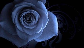 Blue Rose Wallpaper HD