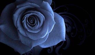 Blue HD Rose Wallpaper
