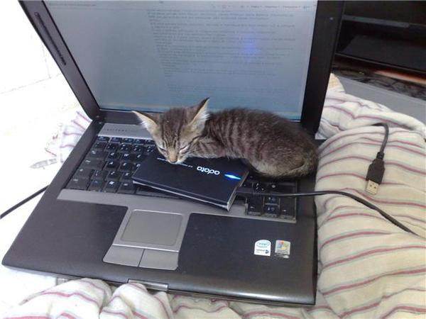 Bomba! Bomba! Descoberto porque os notebooks não tem mouse.