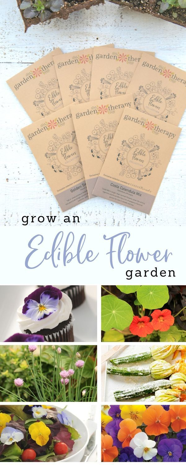 Plant an edible flower garden this year! Flowers are not only beautiful in recipes, but they have unique and interesting flavors as well. Some have tart, bitter, and spicy flavors that add some kick to salads and savory dishes. Others have a sweetness that adds punch to your punch (or other beverages) and desserts. #gardentherapyseeds #edibleflowers #flowergarden #growingfood via @garden_therapy