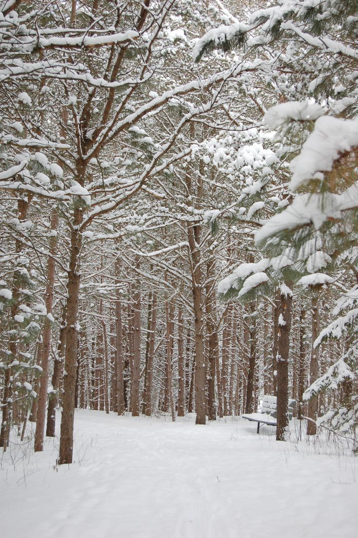 Fresh snow on the trails at Little Cataraqui! #snowshoeing #xcrountyskiing #winterfun