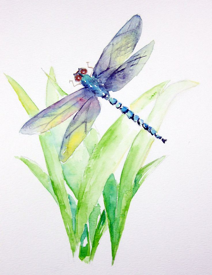 watercolor paintings of dragonflies
