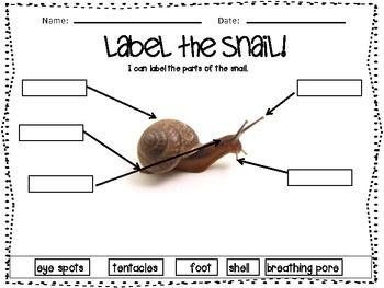 Included in this labeling unit are three small animals: snail, worm, and fish. This is a cross-curricular activity that can be used during Communication Arts to identify parts of the animals and use reading strategies such as beginning sound to determine which is the correct label.
