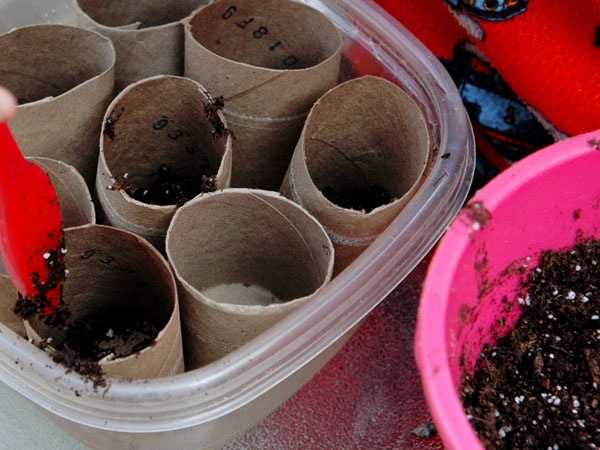 Cardboard Tube Planters