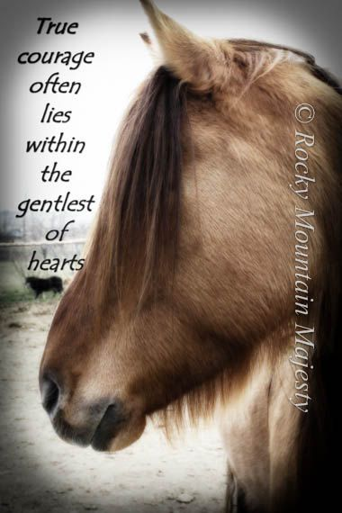 Courage & Gentleness Horse Quote by RockyMountainMajesty, $17.00
