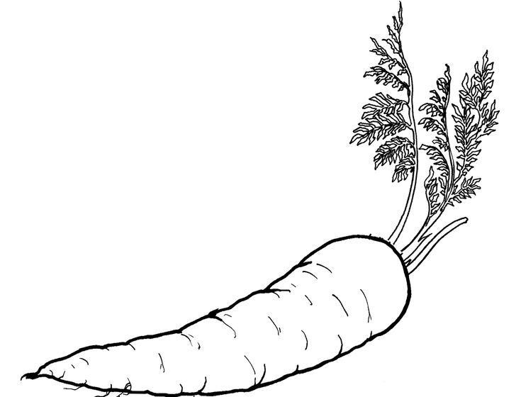 Carrots Coloring Page Of Vegetables Carrots And