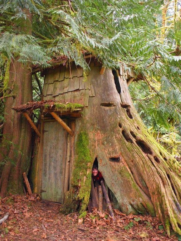 Elegant Cedar Stump House. How Delightful Is This Little Shelter?