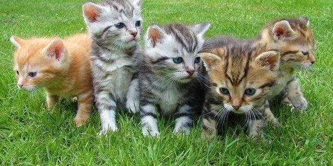 La décision d'adopter un chat ne se prend pas à la légère. Ce n'est pas une peluche qui va arriver dans votre vie, mais bien un animal avec ses besoins, ses attentes ... Adopter un chat est un acte responsable qui doit être réfléchi.