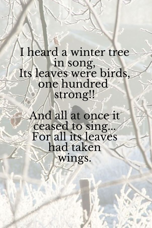 """I heard a winter tree in song Its leaves were birds, a hundred strong; When all at once it ceased to sing, For every leaf had taken wings."