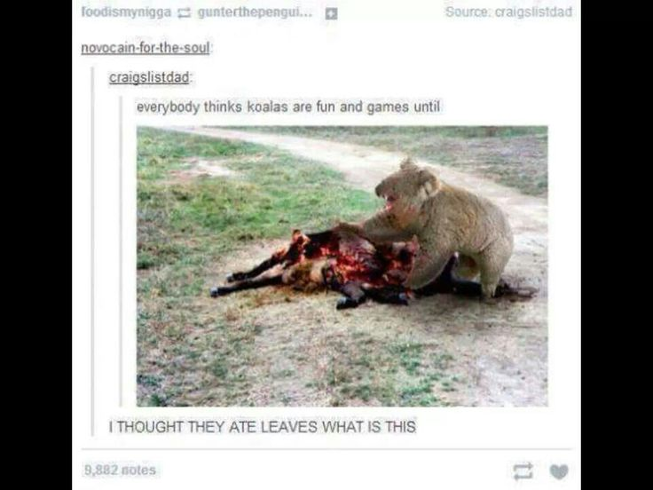 ....Drop bears. u can run u can hide but once they smell you, you're done for. BUT THEY HATE VEGEMITE! SO RUB THAT SHIT ALL OVER YOU!!