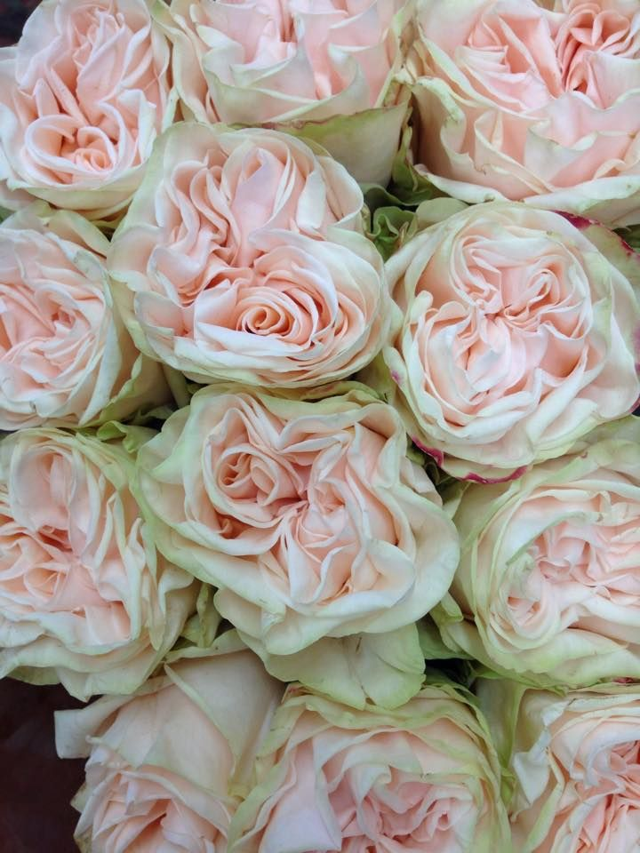 69 Best Images About Garden Rose Cut Flowers On