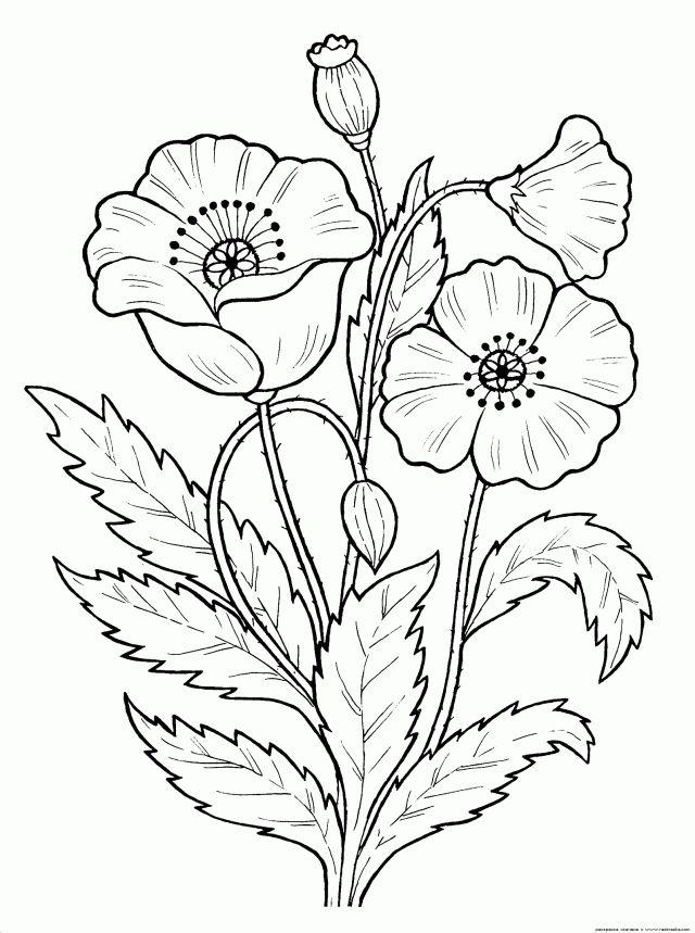 coloriage fleur—-coloriage a imprimer   Coloriage En Ligne Gratuit