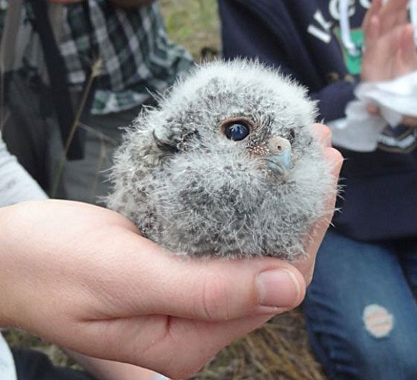 20 Adorable Baby Animals That Fit In The Palm Of Your Hand.