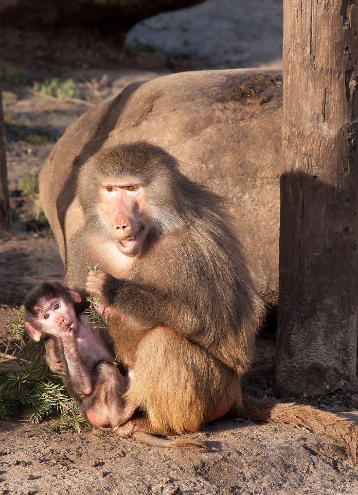 Moeder en kind, leuk he