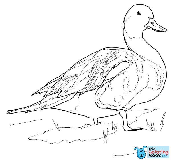 Pin Di Bird Coloring Pages