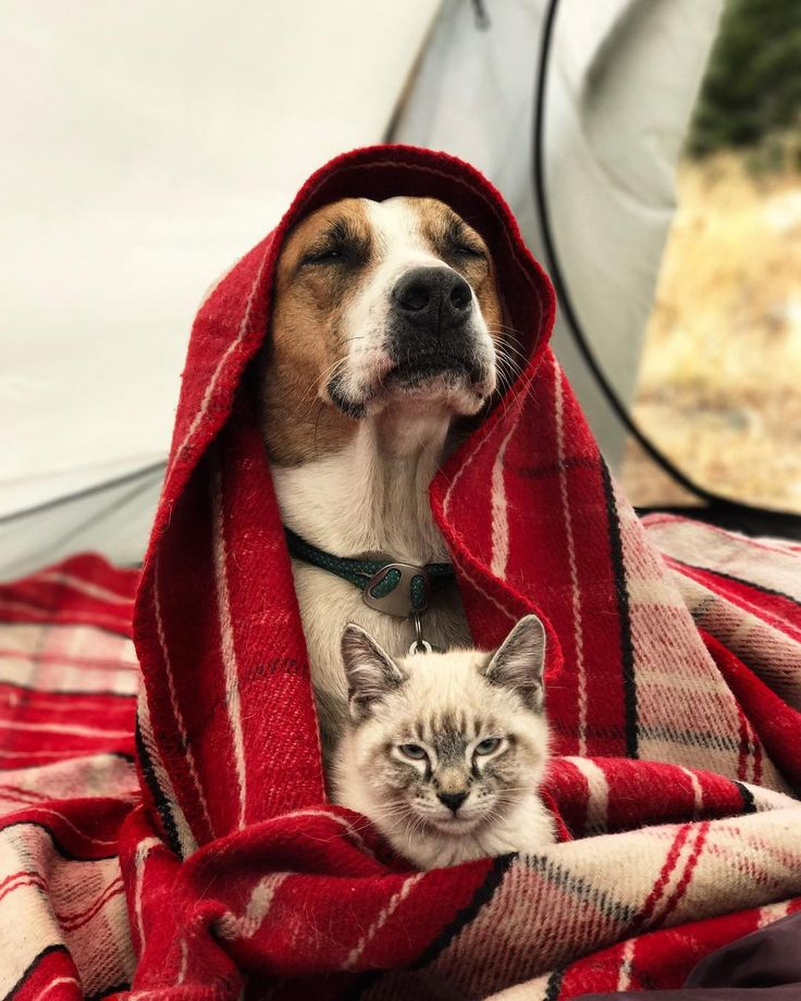 Cat and dog love travelling together and their photo are absolutely epic | Metro News