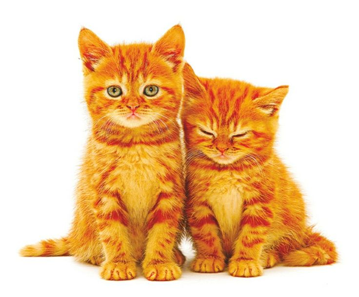 Kalendář 2015 - Kočka, kočičky  http://www.pg.cz/cs/produkt/3050-kotata-poznamkovy-kalendar-2015-30-x-30-cm