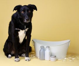 DIY skunk wash for dogs. Using canned tomatoes does not work! This mixture of baking soda, peroxide, and hand soap (ivory is best) helps remove the horrible skunk odor from your pets.