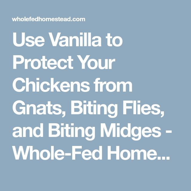 Use Vanilla to Protect Your Chickens from Gnats, Biting Flies, and Biting Midges - Whole-Fed Homestead