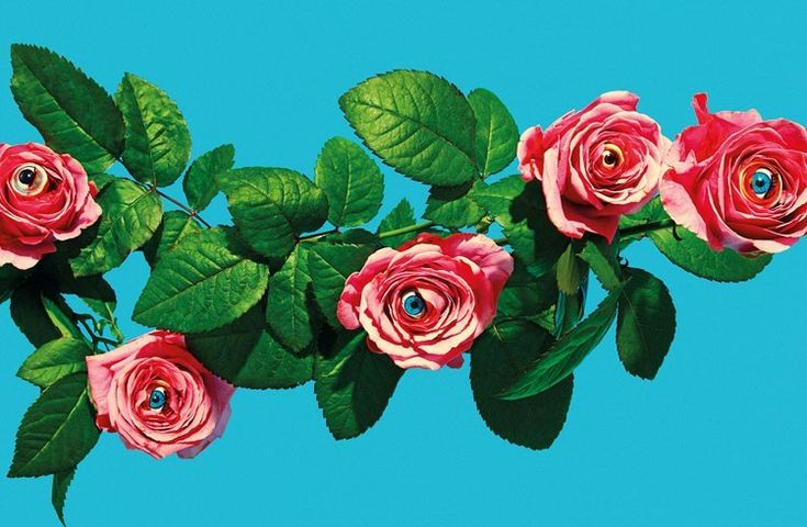 Eyeballs hiddne in roses, by artists Maurizio Cattelan & Pierpaolo Ferrari. More images here: http://www.dazeddigital.com/artsandculture/article/19565/1/provocation-is-in-the-eye-of-the-beholder