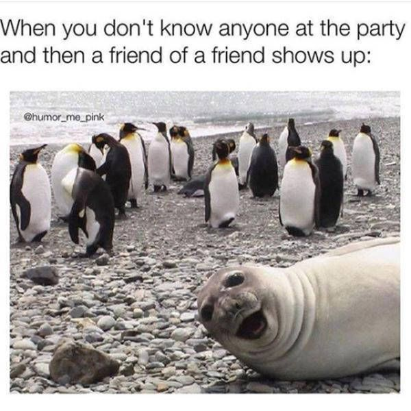 When you don't know anyone at the party funny sea lion meme