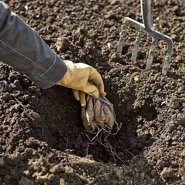 Dahlien pflanzen garten dahlien garten ideen und for Dahlien pflanzen anleitung