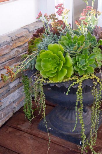 Succulents! Everlasting Mother's Day arrangement.