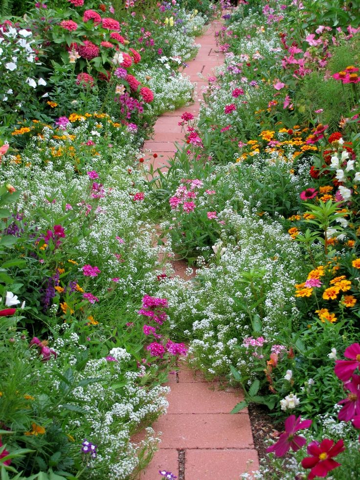 Beautiful flowering path in country cottage style: candytuft, dianthus, marigolds, zinnia, cosmos, snapdragons, lavatera, sage..