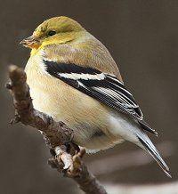 Winter Bird Identification Tips - How to Identify Birds in Winter