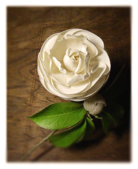 camellia | Flickr - Photo Sharing!