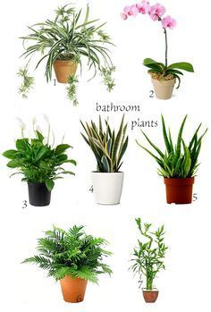 Best Plants For The Bathroom Images On Pinterest Plants