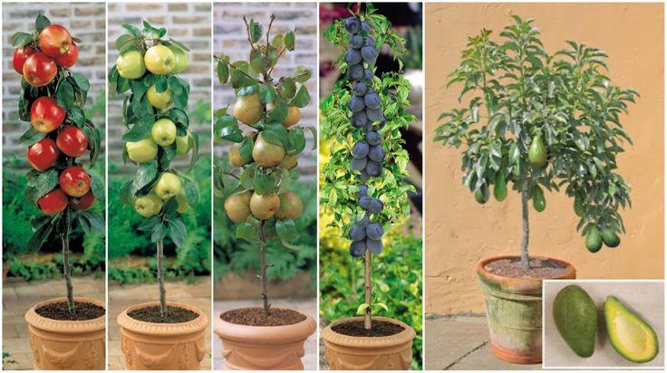 ¿Sabías que puedes cultivar fruta sin tener un jardín?