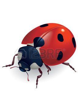 ladybird: Ladybug. (Lat. Coccinellidae) Vector illustration.