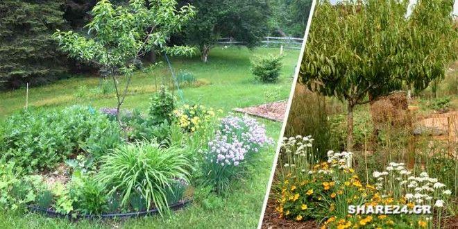 Φυτέψτε Αυτά τα Φυτά κοντά στα Καρποφόρα Δέντρα και Απωθείστε τα Παράσιτα και τα Επιβλαβή Έντομα