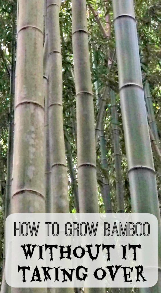Bamboo gets a bad rap as an invasive plant, but there are ways to control it! Follow these handy tips and you can create a beautiful wall of bamboo to set a serene backdrop for your garden. - thehandymansdaughter.com