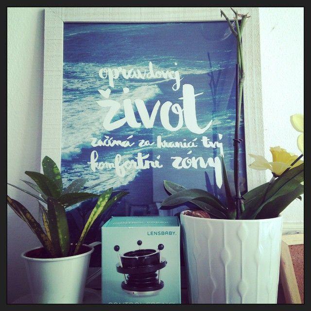 Co je to vůbec ta komfortní zóna? A jak z ní pryč? Rychle. Říkáte si už delší dobu to samé, ale pořád to tak úplně nejde? Pověste si na zeď tenhle plakát jako připomínku a dostaňte se z ní pryč. Žijte. #plakát #motivace #inspirace #dekorace #bydlení #pracovna #citát #typografie #poster #motivation #inspiration #decor #home #homeoffice #quote #typography