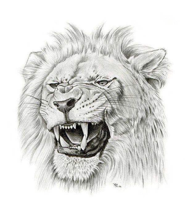 143 best Lion images o...
