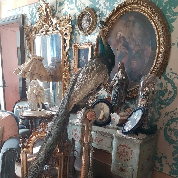 Antique taxidermy