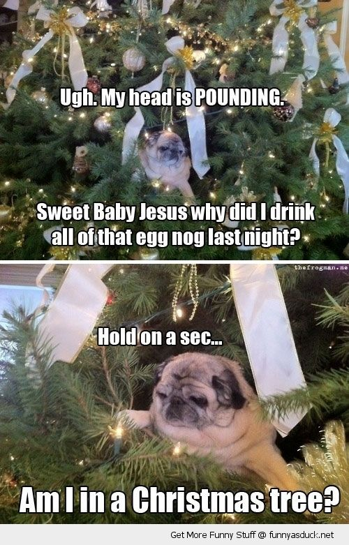 hungover dog pug christmas xmas tree animal funny pics pictures pic picture image photo images photos lol