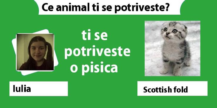 Ce animal ti se potriveste?
