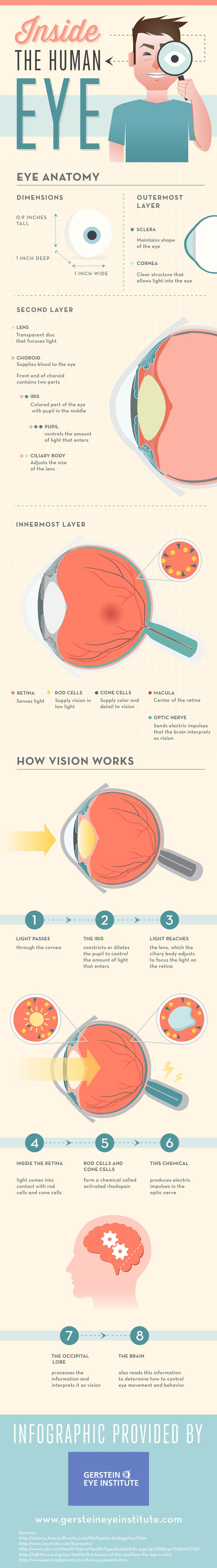 Inside The Human Eye (Infographic)