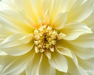 Blomster Fotografi